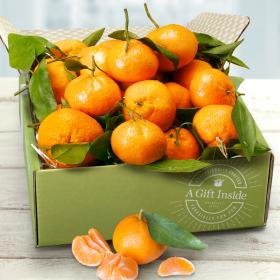 AB1021, Satsuma Mandarins Holiday Gift Box