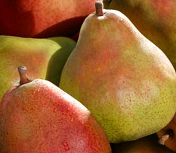 Crimson and Green Comice Pears Combo