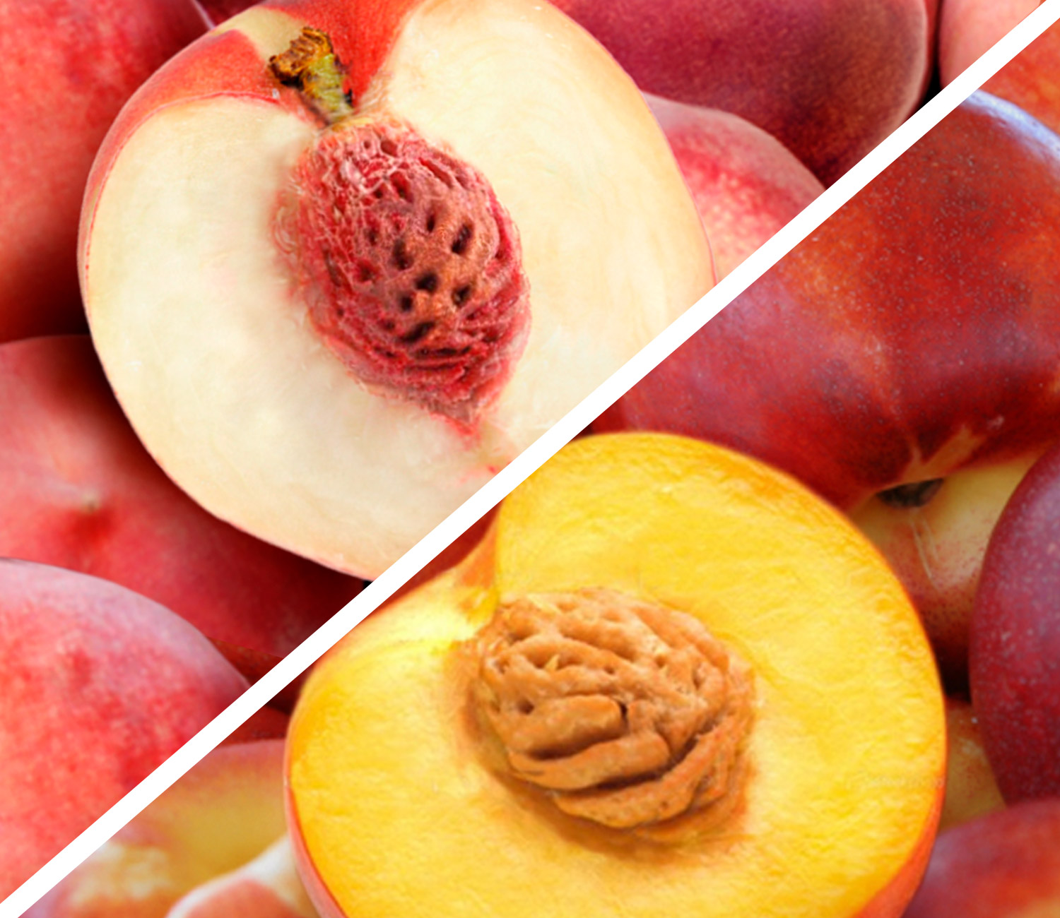 Pearl White Peaches & Sugarine Nectarines