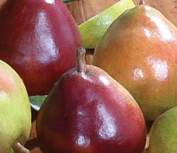 Crimson and Green Comice Pears