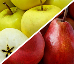 Ginger Gold Apples & Rivermaid Red Pears