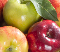 Apple Varietals Medley