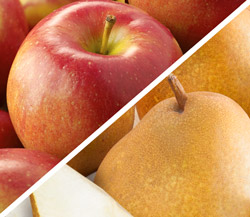 Honeycrisp Apples & Taylors Gold Pears